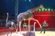 Казка у Вараші: «Ангели Цирку» зачарують містян (Фото)