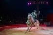 «Ангели Цирку» у Рівному: «Кобзов» здивує містян новим шоу (Фото)