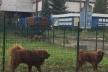 Юрію Бойку для виселення собак з Радіозаводу у Рівному дали часу до 23 лютого