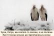 На Рівненщині ветеринар надає притулок виснаженим та немічним лелекам (Фото)