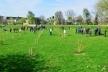 У селі Бокійма, що на Млинівщині, від сьогодні ростиме парк Дружби