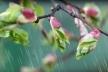Sinoptik: Погода в Рівному та Рівненській області на четвер, 19 квітня