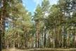 Деревообробники Рівненщини  прийшли з питанням стабілізації постачання сировини до ОДА