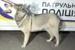 Загубленого собаку знайшли рівненські патрульні (Відео)