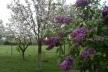 Sinoptik: Погода в Рівному та Рівненській області на четвер, 26 квітня