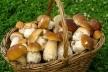 У Рівному продають гриби з радіацією (Відео)