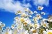 Sinoptik: Погода в Рівному та Рівненській області на середу, 23 травня