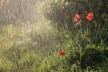 Sinoptik: Погода в Рівному та Рівненській області на 23-24 червня