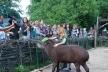 Рівненський зоопарк запрошує за лаштунки