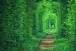 Від сьогодні до «Тунелю Кохання» просто так не заїдеш