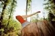 На Рівненщині продовжують незаконно вирубувати дерева