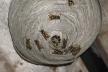 На Рівненщині рятувальники знешкодили кубло ос