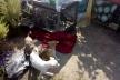 Рівненські волонтери та зоозахисники шукають фотографа для тварин (Фото)