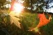 Осіннє літо або ж бабине