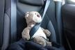Рівненщина приєдналася до онлайн-кампанії «Я відповідальний водій/пішохід/пасажир»