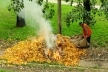 За спалювання сміття та опалого листя жителям Рівненщини загрожує штраф