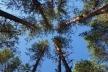 Помер мисливець з Вараша, якого вчора на Поліссі підстрелили на полюванні