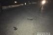 Водій на Рівненщині збив чоловіка і втік (Фото)