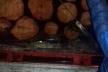 Машину з нелегальною деревиною зупинили на Рівненщині
