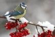Рівненський заповідник оголосив фотоконкурс на зимових птахів