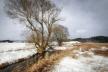 Sinoptik: Погода в Рівному та Рівненській області на п'ятницю, 22 лютого