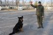 Кінолог Нацгвардії про дружбу між собакою та людиною