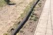 У Рокитному на Рівненщині з території районного «Інваспорту» викопали троянди і кущі самшиту