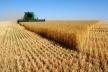 Аграрії Рівненщини жнивують