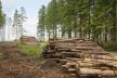 Рівненські лісівники поповнили місцеві бюджети на 61 мільйон гривень
