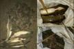 Демидівський браконьєр наловив риби на чималу суму