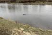 Березнівські рятувальники дістали тіло з річки Случ