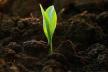 У Рівному листя перероблюватимуть на біогумус