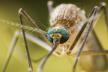 Випадок захворювання на тропічну малярію зареєстровано у Рівному