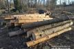 Викрадену деревину з Рівненщини виявили на Волині