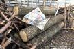 Костопільські поліцейські вилучили дубові колоди