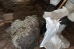 У Сарнах рятувальники знешкодили кубло шершнів