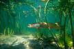 На Демидівщині рибоохоронний патруль затримав браконьєра