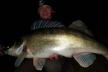 Поблизу Вараша риболов упіймав величезну рибину (ФОТО)