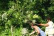 У Рівному кипить робота тресту зеленого господарства (ФОТО)
