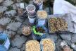 На Рівненщині вдруге за чотири місяці впіймали бурштинокопача-нелегала