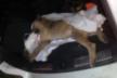 В Острозі водій навмисне переїхав собаку