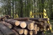 Нардеп Іванісов повідомляє про закорумпованість усієї вертикалі  лісової галузі