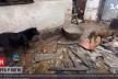 Коти й собаки з цуценятами згоріли живцем у приватному притулку на Рівненщині (ВІДЕО)