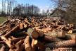 У рамках програми президента «Зелена країна» за три роки мають висадити мільярд дерев
