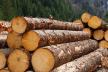Хто зупинить кумівсто і кругову поруку у лісовій галузі?