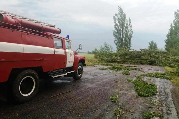 На Рівненщині буревій заблокував майже 11 кілометрів автошляху (Фото)
