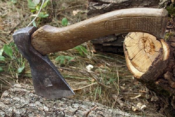 У прокуратурі відомо про змову в лісових районах