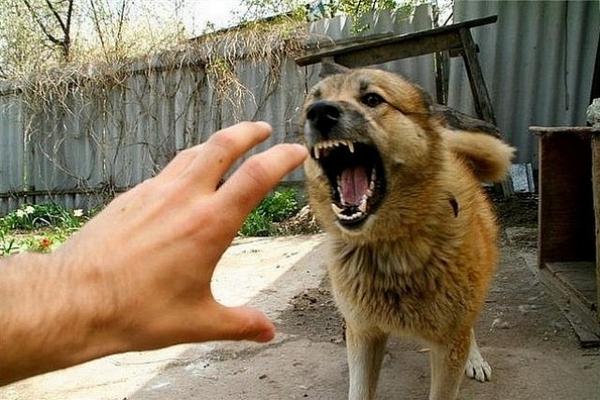 У Здолбунові порахували, скільки собак покусали людей