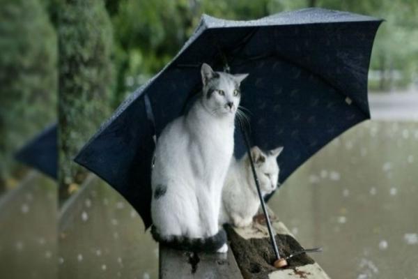 27-28 серпня на Рівненщині очікуються короткочасні дощі