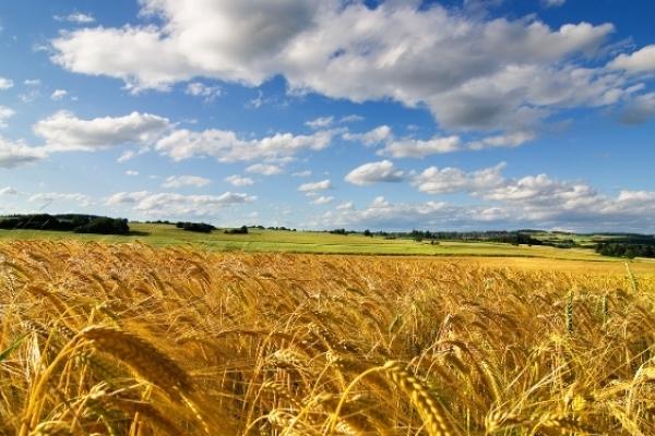 Як зі своєю землею не потрапити у рабство до агрохолдингів